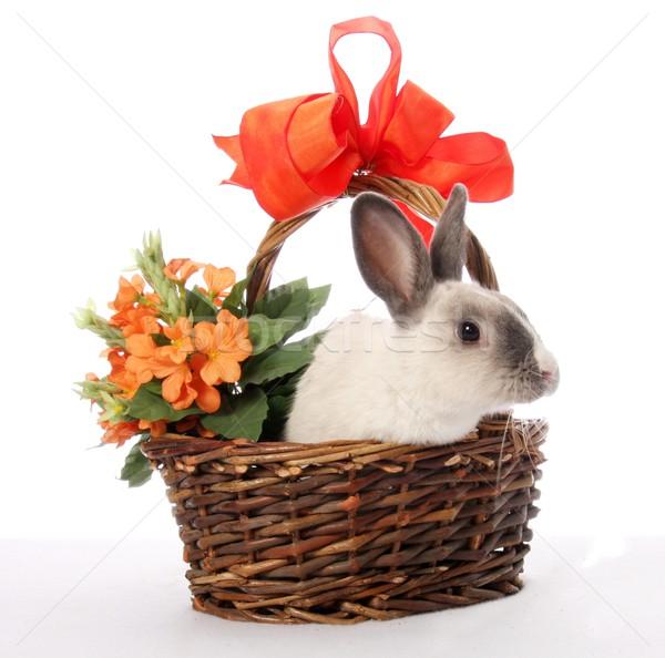 バニー ウサギ バスケット かわいい 花 ストックフォト © fouroaks
