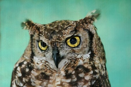 Eagle owl oiseau jaune yeux belle Photo stock © fouroaks