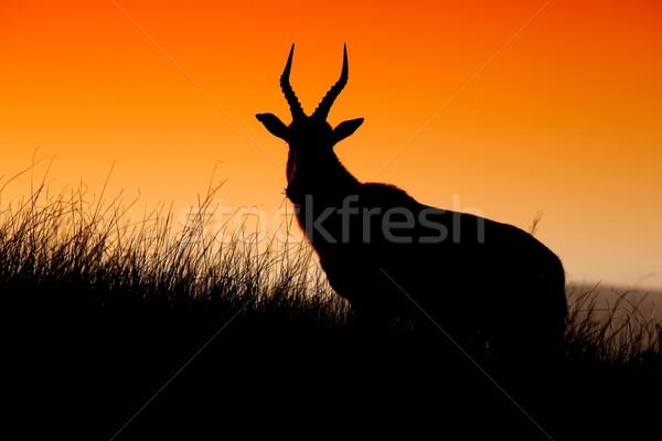 シルエット アフリカ オレンジ 空 日没 草 ストックフォト © fouroaks