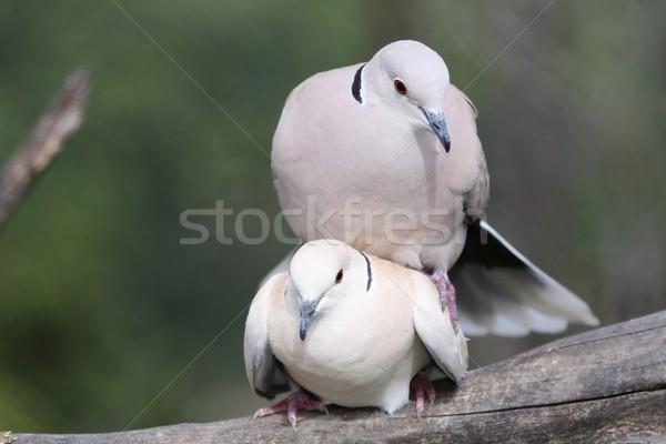 2 美しい リング 愛 ストックフォト © fouroaks
