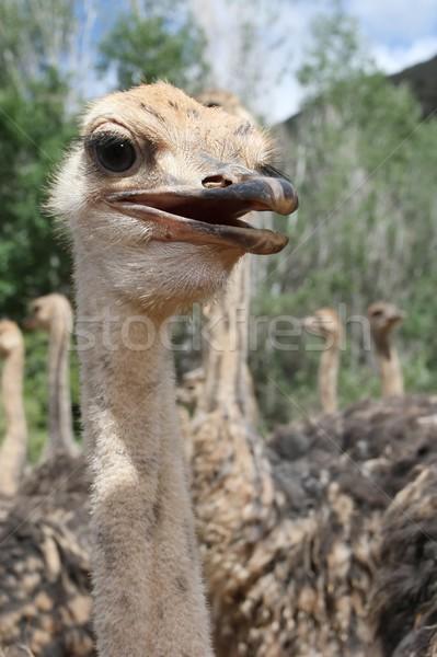 群れ 小さな 南アフリカ 眼 髪 鳥 ストックフォト © fouroaks