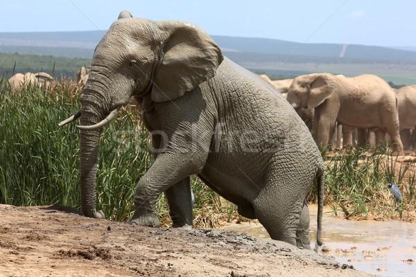éléphant escalade sur boue bain Photo stock © fouroaks