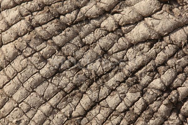 Elefante africano pele coberto secas lama proteção Foto stock © fouroaks