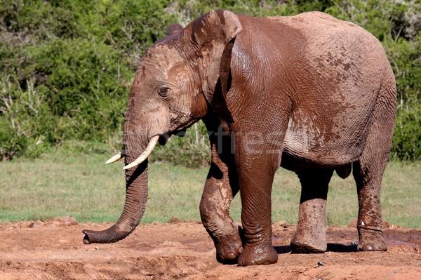Сток-фото: Африканский · слон · мужчины · большой · африканских · воды · Африка