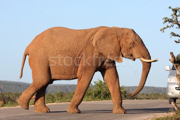 Afrika fil yol park Güney Afrika Afrika hayat Stok fotoğraf © fouroaks