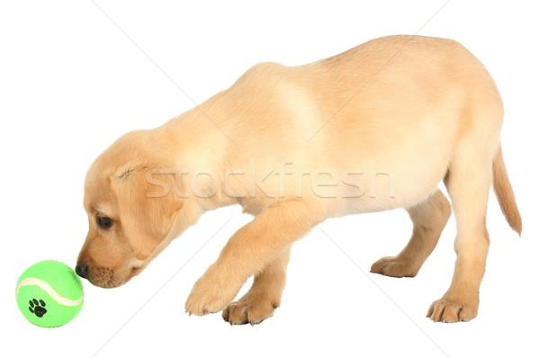 Adorable cachorro pelota cute aprendizaje jugar Foto stock © fouroaks