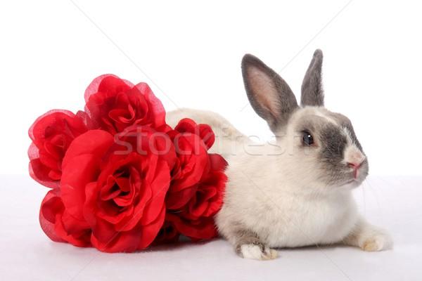 Stok fotoğraf: Tavşan · tavşan · güller · sevimli · evcil · hayvan · kırmızı · gül