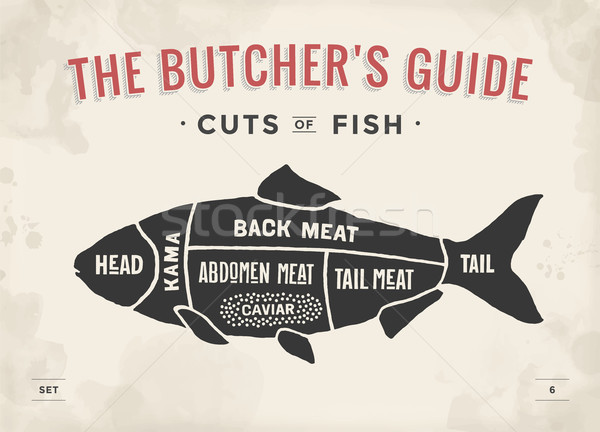 Cut of meat set. Poster Butcher diagram and scheme - Fish. Vintage typographic hand-drawn Stock photo © FoxysGraphic