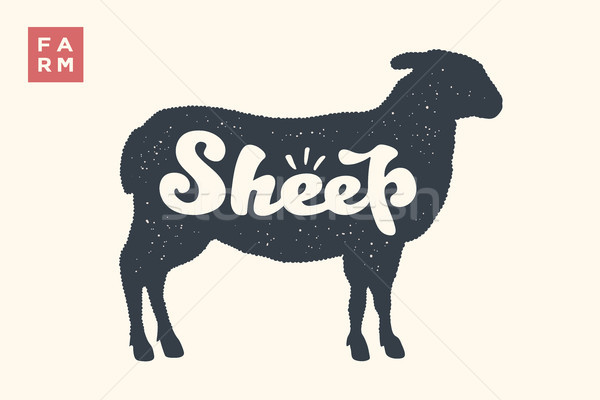 Sheep. Lettering, typography Stock photo © FoxysGraphic