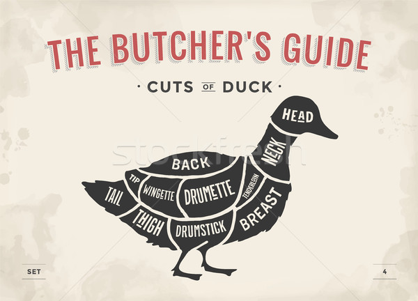 Stock photo: Cut of meat set. Poster Butcher diagram and scheme - Duck. Vintage typographic hand-drawn. Vector Il