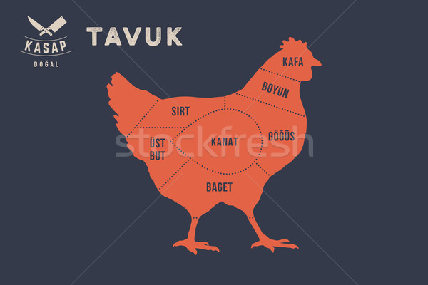 Meat cuts. Poster Butcher diagram - Tavuk Stock photo © FoxysGraphic