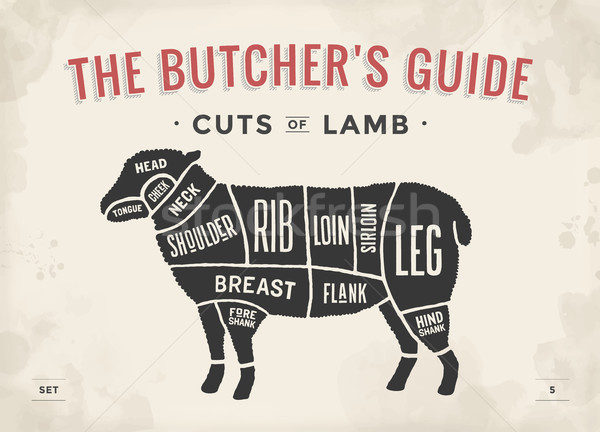 Cut of beef set. Poster Butcher diagram and scheme - Lamb. Vintage typographic hand-drawn. Vector il Stock photo © FoxysGraphic