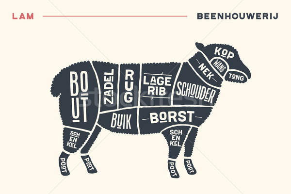 Meat cuts. Poster Butcher diagram and scheme - Lamb Stock photo © FoxysGraphic