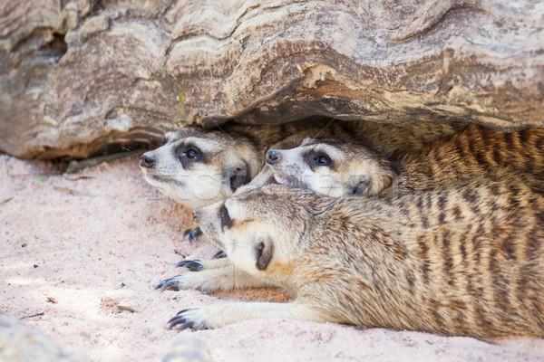 Grupo adormecido madeira buraco cara olhos Foto stock © FrameAngel