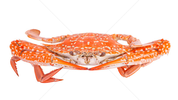 Steam food crab isolated on white background Stock photo © FrameAngel