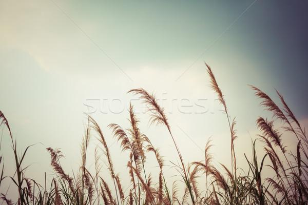 Resumen naturaleza campo de hierba cielo hierba arte Foto stock © FrameAngel