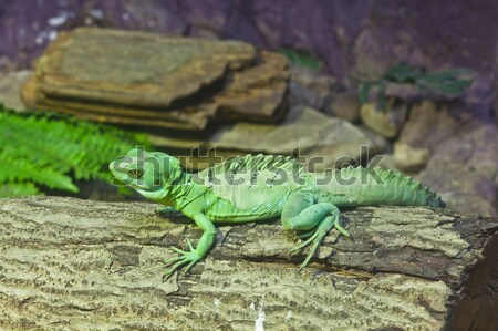 トカゲ スティック 草 緑 アジア ストックフォト © FrameAngel
