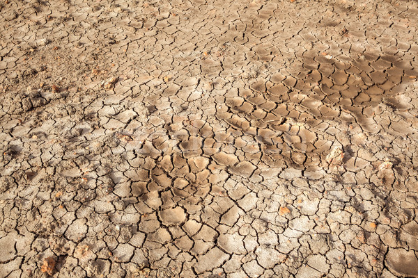 dry soil crack texture land area, can use as background agricult Stock photo © FrameAngel