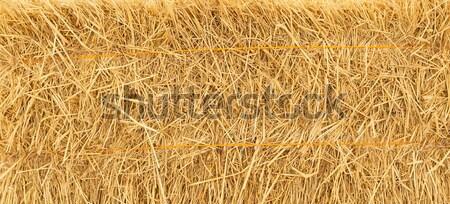 pile of straw background Stock photo © FrameAngel