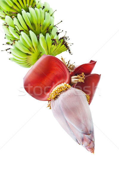 Banana Flower, and bunch in Agriculture and plantation Stock photo © FrameAngel