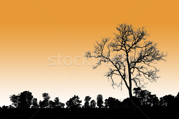 death tree standing alone in natural environment  Stock photo © FrameAngel