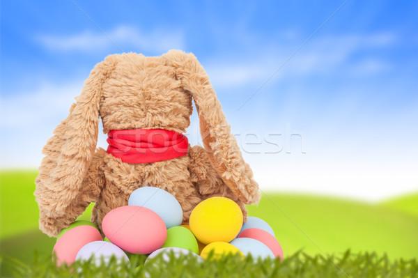 ウサギ 座る 緑の草 グループ カラフル 卵 ストックフォト © FrameAngel