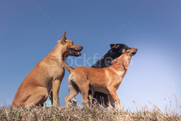 portrait of group of family dog playing in the meadow and blue s Stock photo © FrameAngel