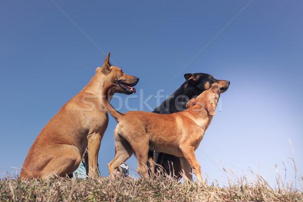 Portrait groupe famille chien jouer prairie Photo stock © FrameAngel