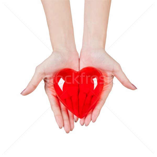 Heart in the hands isolated on white background Stock photo © FrameAngel