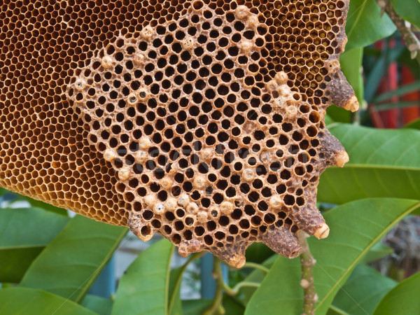 Méhsejt méh minta hátterek sejt citromsárga Stock fotó © FrameAngel