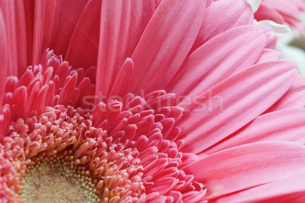 Köteg virágpor virágok közelkép rózsa kert Stock fotó © FrameAngel
