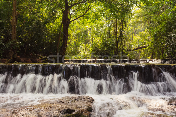 forest waterfall Stock photo © FrameAngel