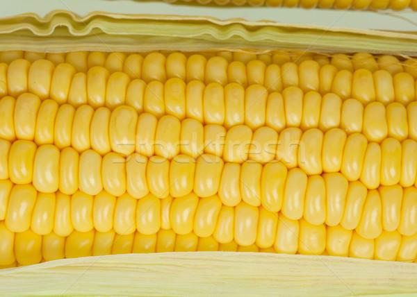 corn cob Stock photo © FrameAngel