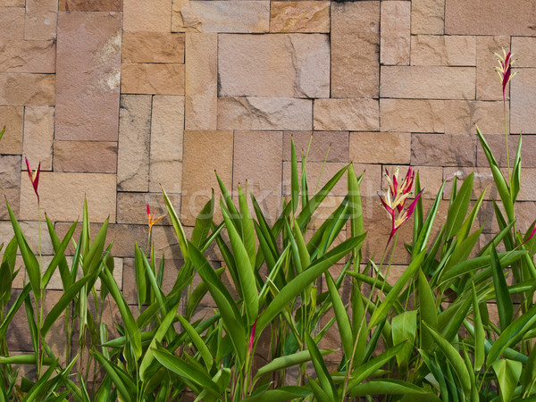 fresh green leaf that against brown wall Stock photo © FrameAngel