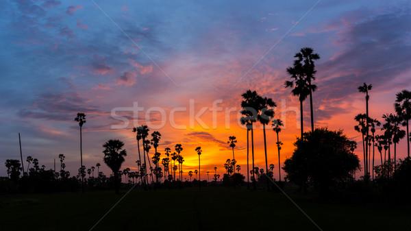 Azúcar palmera silueta cielo puesta de sol crepúsculo Foto stock © FrameAngel