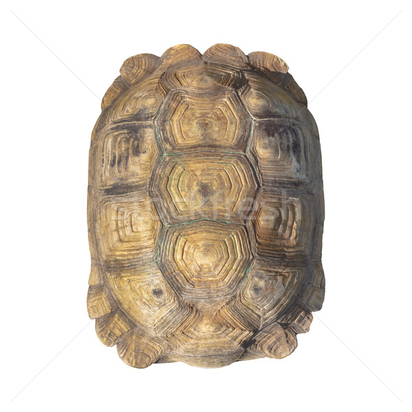 Tortoise shell brown color from giant turtle on white background Stock photo © FrameAngel