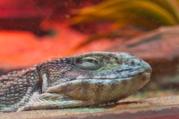 Uśmiechnięta twarz mały jaszczurka trawy zielone asian Zdjęcia stock © FrameAngel