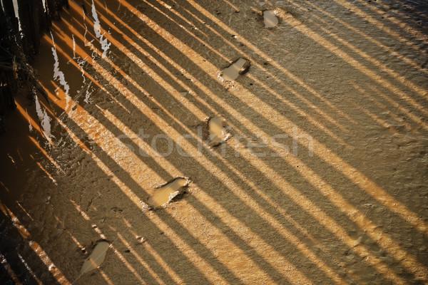 Lábnyom erdő tengerpart fény sétál béke Stock fotó © FrameAngel