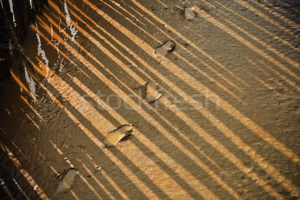 footprint in mangrove forest Stock photo © FrameAngel