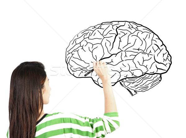 Foto stock: Mulher · desenho · cérebro · humano · diagrama · negócio · luz