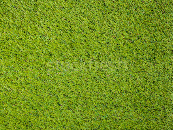 Artificielle gazon japonais vert texture football Photo stock © FrameAngel