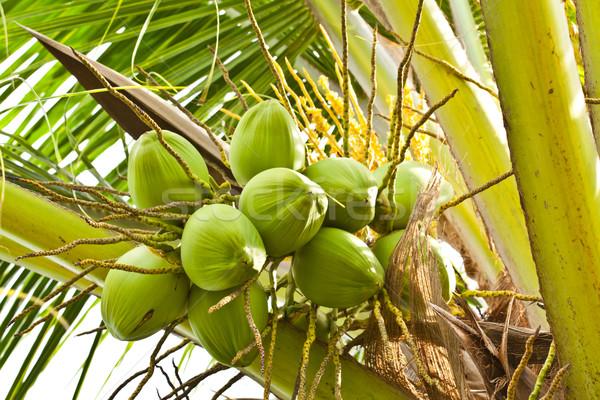 Stock fotó: Gyümölcs · zöld · kókusz · fa · tengerpart · étel