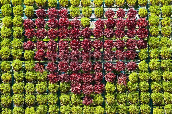 heart plants background Stock photo © FrameAngel