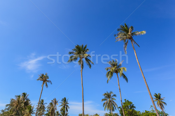 coconut palm tree group with blue sky background, as summer them Stock photo © FrameAngel