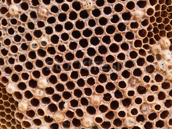 En nid d'abeille modèle abeille horizons cellule jaune Photo stock © FrameAngel