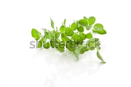 Oregano fotó friss levelek fehér zöldségek Stock fotó © Francesco83