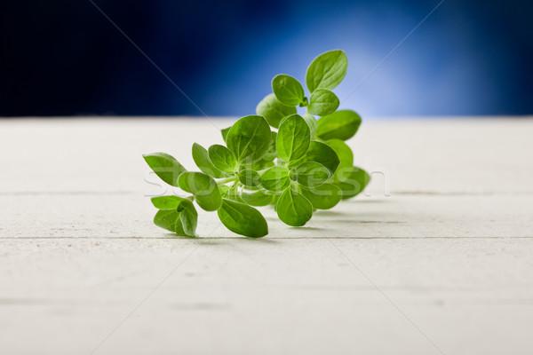 オレガノ スポット 光 写真 新鮮な 葉 ストックフォト © Francesco83