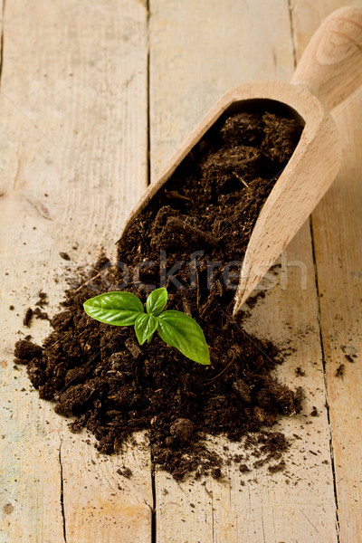 Gardening birth of basil plant Stock photo © Francesco83