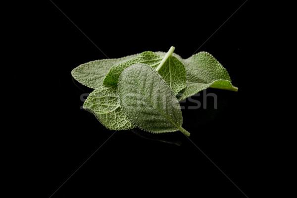 Zsálya fotó finom friss levelek fekete Stock fotó © Francesco83