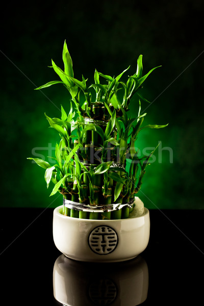 Bambù impianto foto nero vetro tavola Foto d'archivio © Francesco83